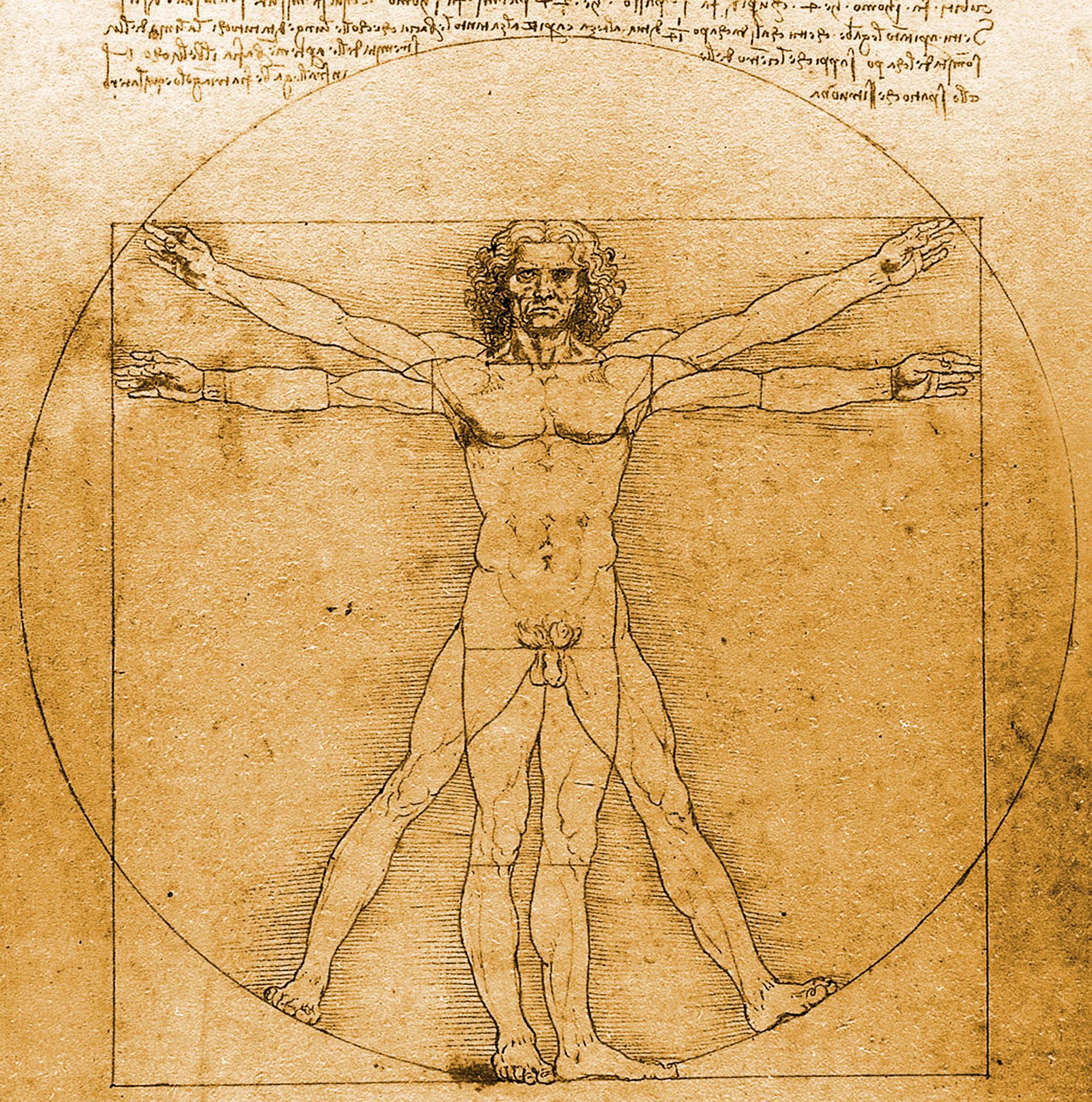 Partes del cuerpo, Osteomuscular